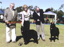Left to right Judge Eric Desschans, Aust Ch Mirribandi Morgannah - BEST OF BREED, her breeder/handler Kathryn and the RUBest of Breed & handler