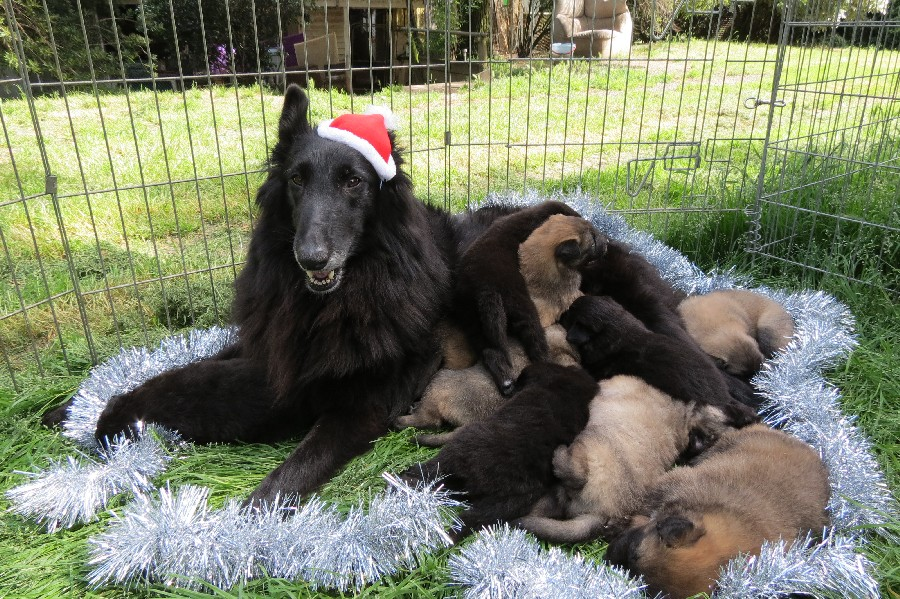 Raven and her pups